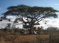 Kenyan Tree House